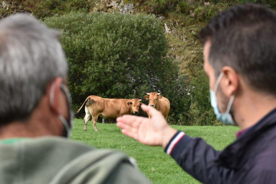 El Grupo Parlamentario Socialista pide dotar la Unidad Veterinaria de Villablino con un mínimo de cuatro profesionales veterinarios para cubrir de manera eficiente el servicio